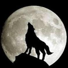 lonewolf888
